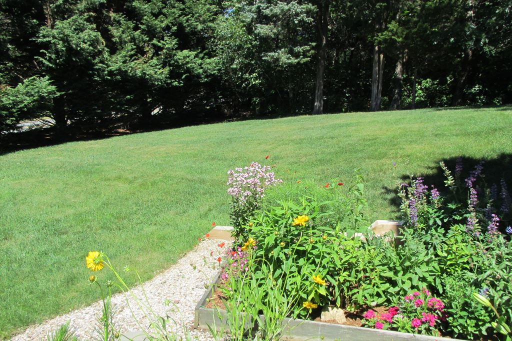 More side and back yard