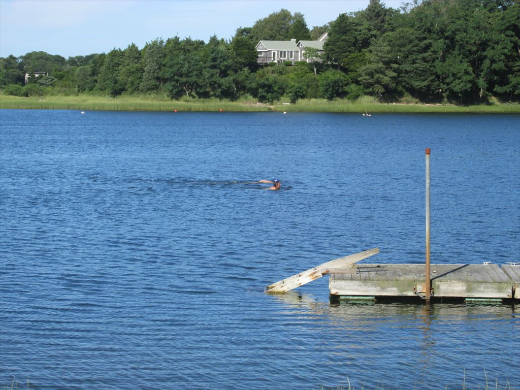 Swimmer in Mill Pond